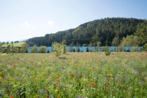 Außenansicht Grüne Erde-Welt mit Blumenwiese