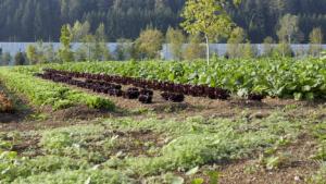 Grüne Erde-Welt Gemüsefelder
