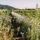 Nachhaltigkeitswoche in der Grüne Erde-Welt