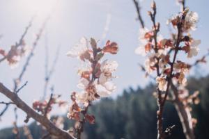 Frühling in der Grüne Erde-Welt