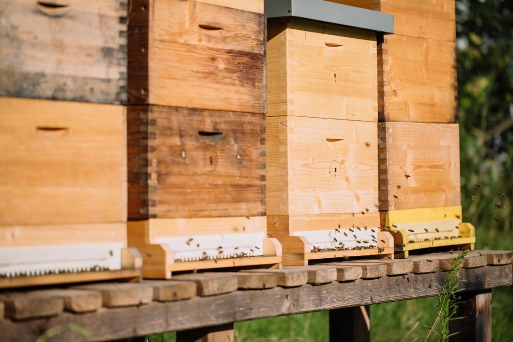 Bienen in der Grüne Erde-Welt