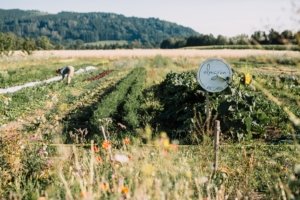 Gemüseanbau von almgrün