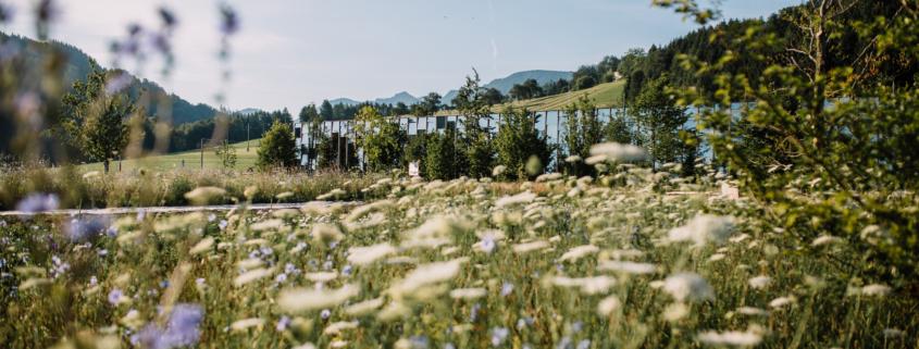 Frühling in der Grüne Erde-Welt Gemüseanbau von almgrün Herzlich Willkommen in der Grüne Erde-Welt Grüne Erde-Welt Gewächshaus 3 Bio-Frühstück im Genießergarten