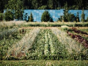 Die Kraft der Natur erleben in der Grüne Erde-Welt