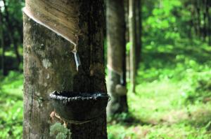 Grüne Erde_Gemeinwohlbericht_Naturlatex