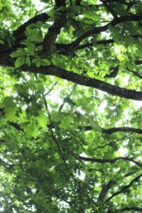 Grüne Erde_Gemeinwohlbericht_S.14_