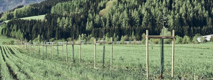 Grüne Erde-Welt – Agroforst-Projekt