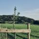 Grüne Erde-Welt – Agroforst- Projekt