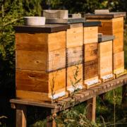 Grüne Erde-Welt – Bienenstöcke