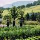 """Grüne Erde-Welt_Biologischer Gemüseanbau von """"almgrün"""""""